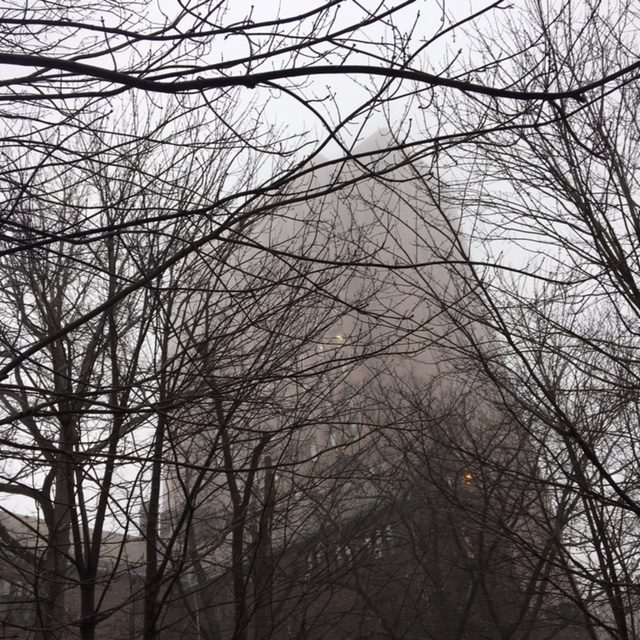Looking at Yale's Kline Biology Tower through bare tree limbs and thick fog